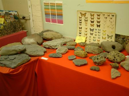 a good selection of fossils