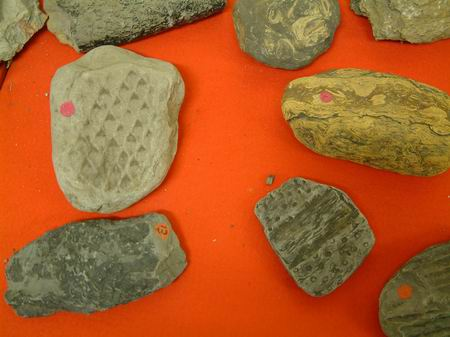 close up of some fossils